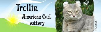 Trollin - American Curl cattery, Finland